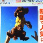 【韓国で流行】空ショットが動物虐待と炎上!危険な事故も起きていた!
